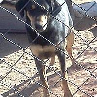 Adopt A Pet :: Susie - Tonopah, AZ