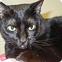 Adopt A Pet :: Nia - Miami, FL