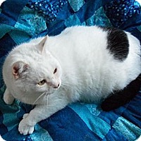 Adopt A Pet :: Thomas - Spencer, NY