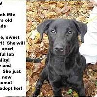 Adopt A Pet :: # 669-09 @ Animal Shelter - Zanesville, OH
