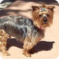 Adopt A Pet :: Brownie - Tallahassee, FL