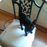 Adopt A Pet :: Naples - Chicago, IL
