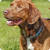 Adopt A Pet :: Drake - Cincinnati, OH