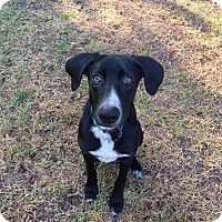Adopt A Pet :: Mikey - Lewisville, IN