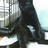 Adopt A Pet :: Sasha - St Paul, MN