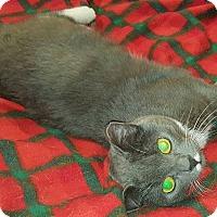 Adopt A Pet :: Maravilla - Chicago, IL