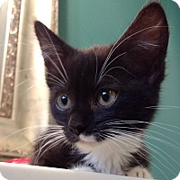 Adopt A Pet :: Morticia - Winchester, VA