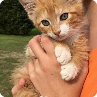 Adopt A Pet :: Storm - Washington, DC