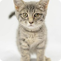 Adopt A Pet :: Barbara - Oxford, MS