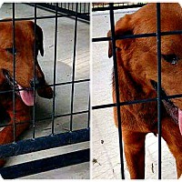 Adopt A Pet :: RUSTY - Rootstown, OH