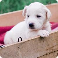Adopt A Pet :: Donna $250 - Seneca, SC