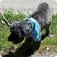 Adopt A Pet :: Bailey - Kalamazoo, MI