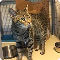 Adopt A Pet :: Marina - St. Johnsbury, VT