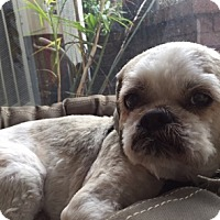 Adopt A Pet :: Wickett - Rancho Palos Verdes, CA