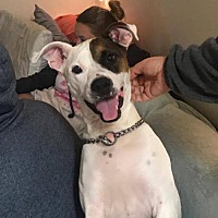 Adopt A Pet :: Claire - Melrose, FL