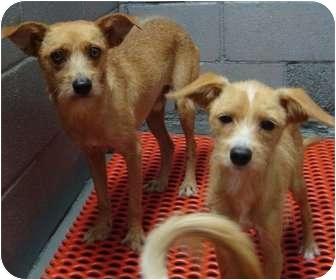 Terrier (Unknown Type, Small) Mix Dog for adoption in Arkadelphia, Arkansas - Mario and Michael