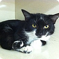 Adopt A Pet :: Aruba - Riverhead, NY