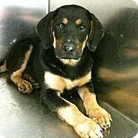 Adopt A Pet :: Cruz - Southampton, PA