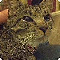 Adopt A Pet :: Cookie - Syracuse, NY