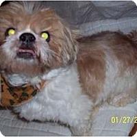 Adopt A Pet :: Bailey - Wapwallopen, PA