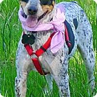 Adopt A Pet :: Ruby Rose special - Sacramento, CA