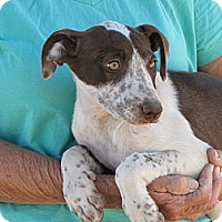 Adopt A Pet :: GYPESEE - Nuevo, CA