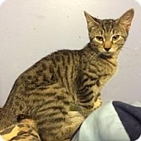 Adopt A Pet :: Titan - Pittstown, NJ