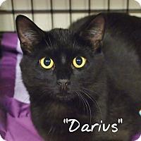 Adopt A Pet :: Darius - Ocean City, NJ