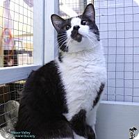 Adopt A Pet :: Slingshot - Mission, BC