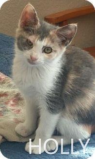 Calico Kitten for adoption in Corona, California - HOLLY