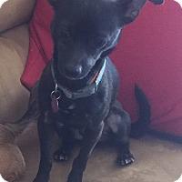 Adopt A Pet :: Oscar2 - Las Vegas, NV