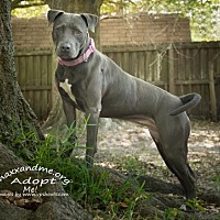 Adopt A Pet :: Gracie - Tampa, FL