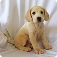 Adopt A Pet :: Hansel - Chester Springs, PA
