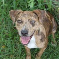 Adopt A Pet :: Iris - Russellville, KY