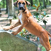 Adopt A Pet :: Blakely - Knoxville, TN
