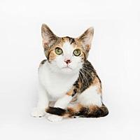 Adopt A Pet :: Peaches - New York, NY