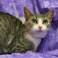 Adopt A Pet :: Doris - Addison, IL