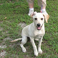 Adopt A Pet :: Lady - Oakland, AR