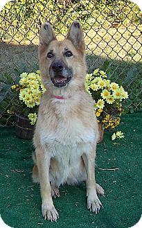 German Shepherd Dog Dog for adoption in Marietta, Georgia - BABY DOLL (R)