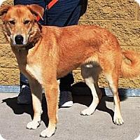 Adopt A Pet :: Kenny - Gilbert, AZ