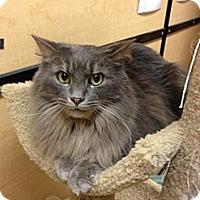 Adopt A Pet :: Timothy - Monroe, GA