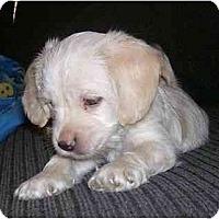 Adopt A Pet :: Casper - Chandler, IN
