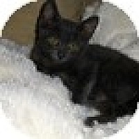 Adopt A Pet :: Moe - Vancouver, BC