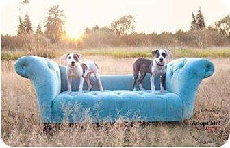 Terrier (Unknown Type, Medium) Mix Puppy for adoption in Kingston, Washington - ROMEO