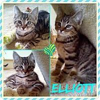 Adopt A Pet :: Elliot - Jeffersonville, IN