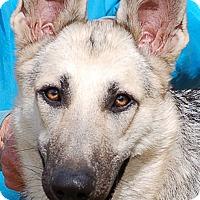 Adopt A Pet :: Jasmine AD 04-22-17 - Preston, CT