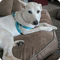 Adopt A Pet :: Dixie - Cross Roads, TX