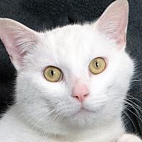 Adopt A Pet :: Odin - Renfrew, PA