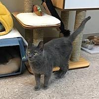 Adopt A Pet :: Owen - Byron Center, MI