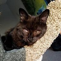 Adopt A Pet :: Edison - Byron Center, MI